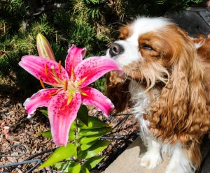 Bailey Flower