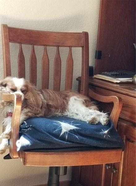 bailey sleep chair