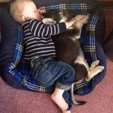 Perfect Anti-Depressants – Pets and Babies!