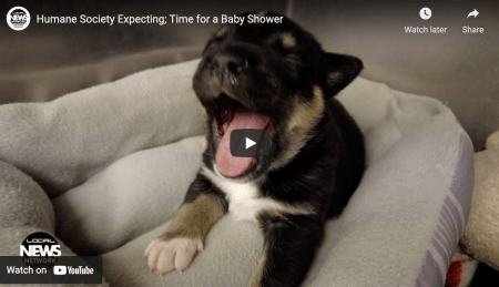Humane Society Expecting; Time for a Baby Shower