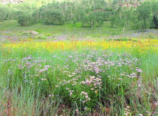 Durago wildflower hikes