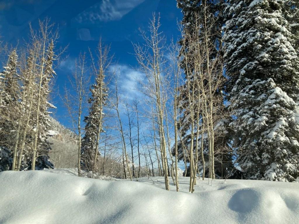 photo of trees,  snow, sky