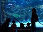 Aquaria KLCC | Pengalaman meredah lautan di Kuala Lumpur