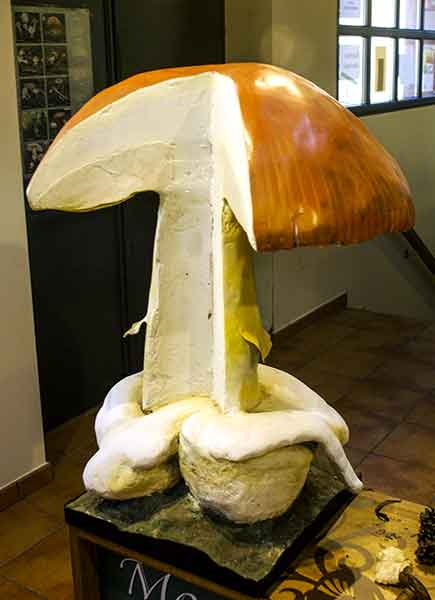 Spanien-Trüffel-Okt-2010-Navaleno-Pilzzentrum-Modell-aufgeschnittener-Pilz