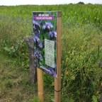 Blühstreifen für Insekten