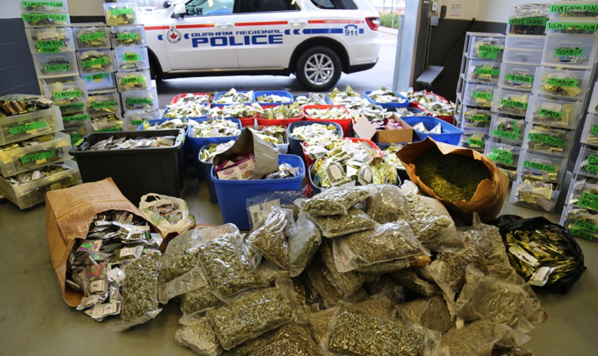 Project Sorento nets $2m in weed, cash