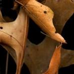 Leaves After Boccioni