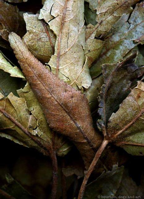 Leaves After Ernst