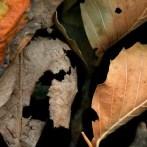 Leaves After Géricault