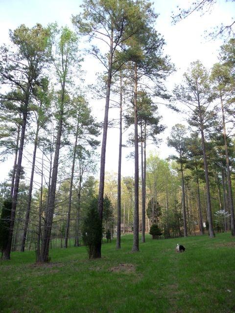 Biltmore Meadow