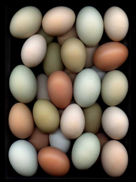 Eggs #3