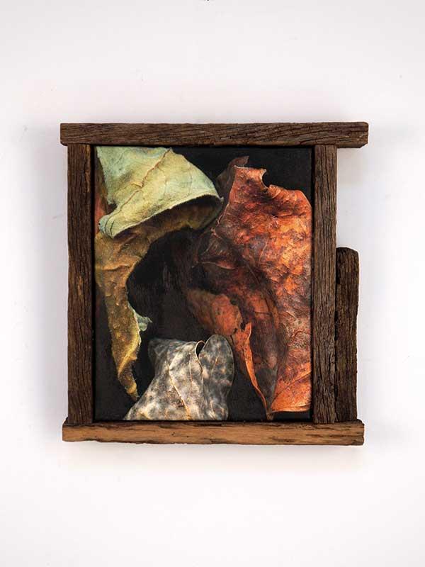 Leaves After Caravaggio Framed