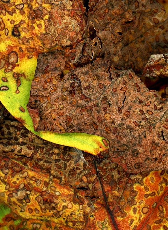 Leaves after Kusama