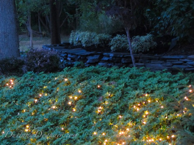 string lights in the garden