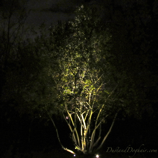 scrub willow uplighting