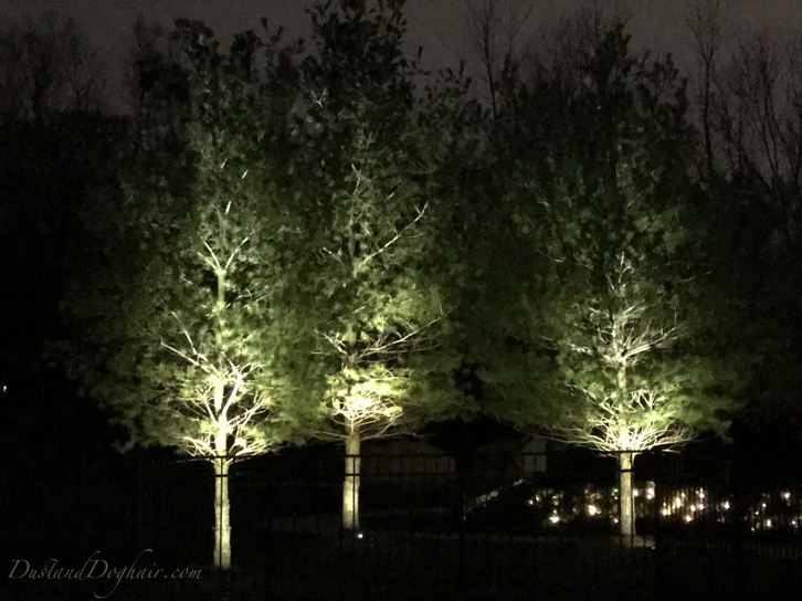 Diy Uplighting Adding Year Round Low Cost Magic To Your