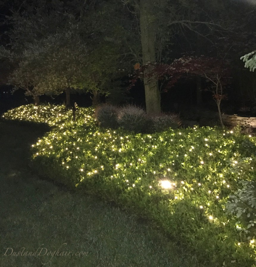 backyard string lights, led lights, fairy lighting, pachysandra