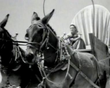 Driving a mule team across the desert