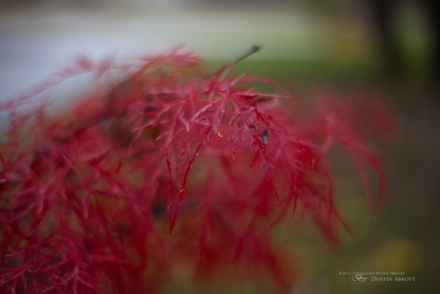 Rich Color and Bokeh
