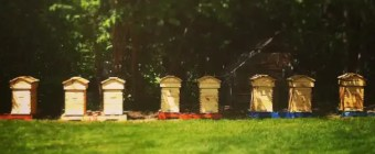 8 Fream Modified Warre Hives