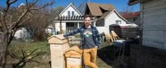 Dustin Bajer, Backyard Beehives Edmonton Alberta