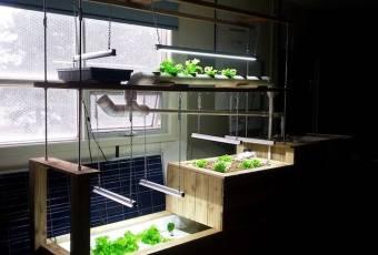 Creating A Classroom Aquaponics System