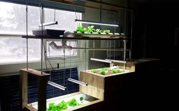 Custom designed classroom aquaponics system by Sea To Sky Aquaponics