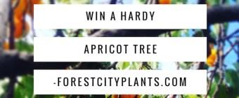 Win A Hardy Capilano Apricot Tree. Edmonton Alberta urban plant nursery