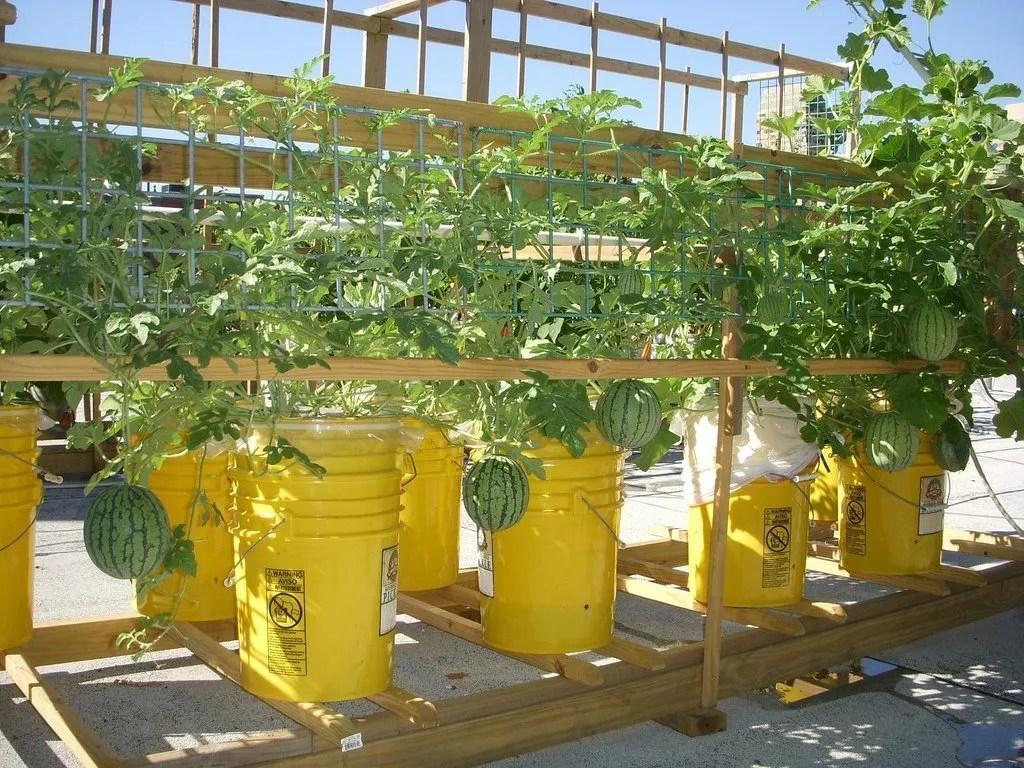Rooftop Global Buckets