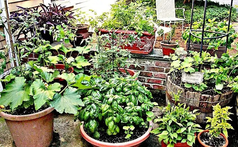 School Container Garden