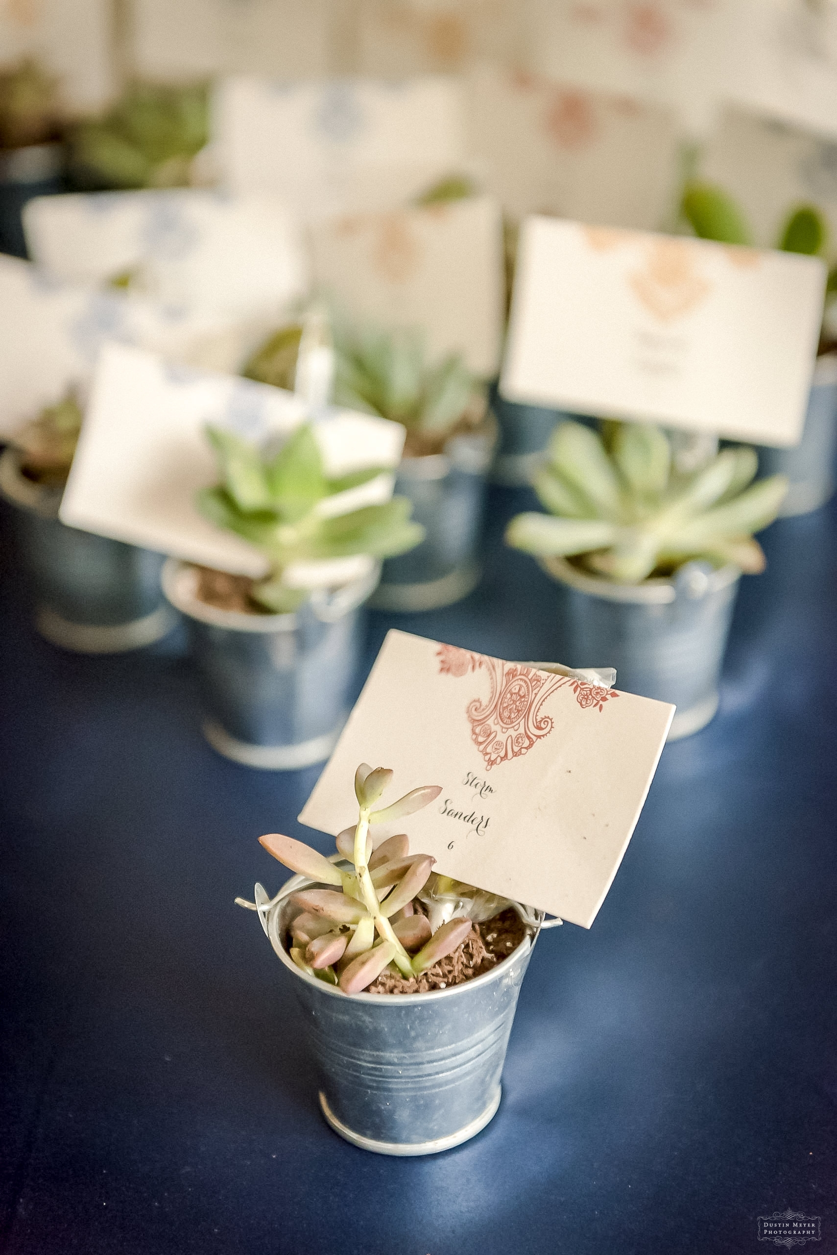 wedding placement cards in succulents