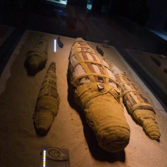 Մումիացված կոկորդիլոսներ, հռոմեական ժամանակաշրջան