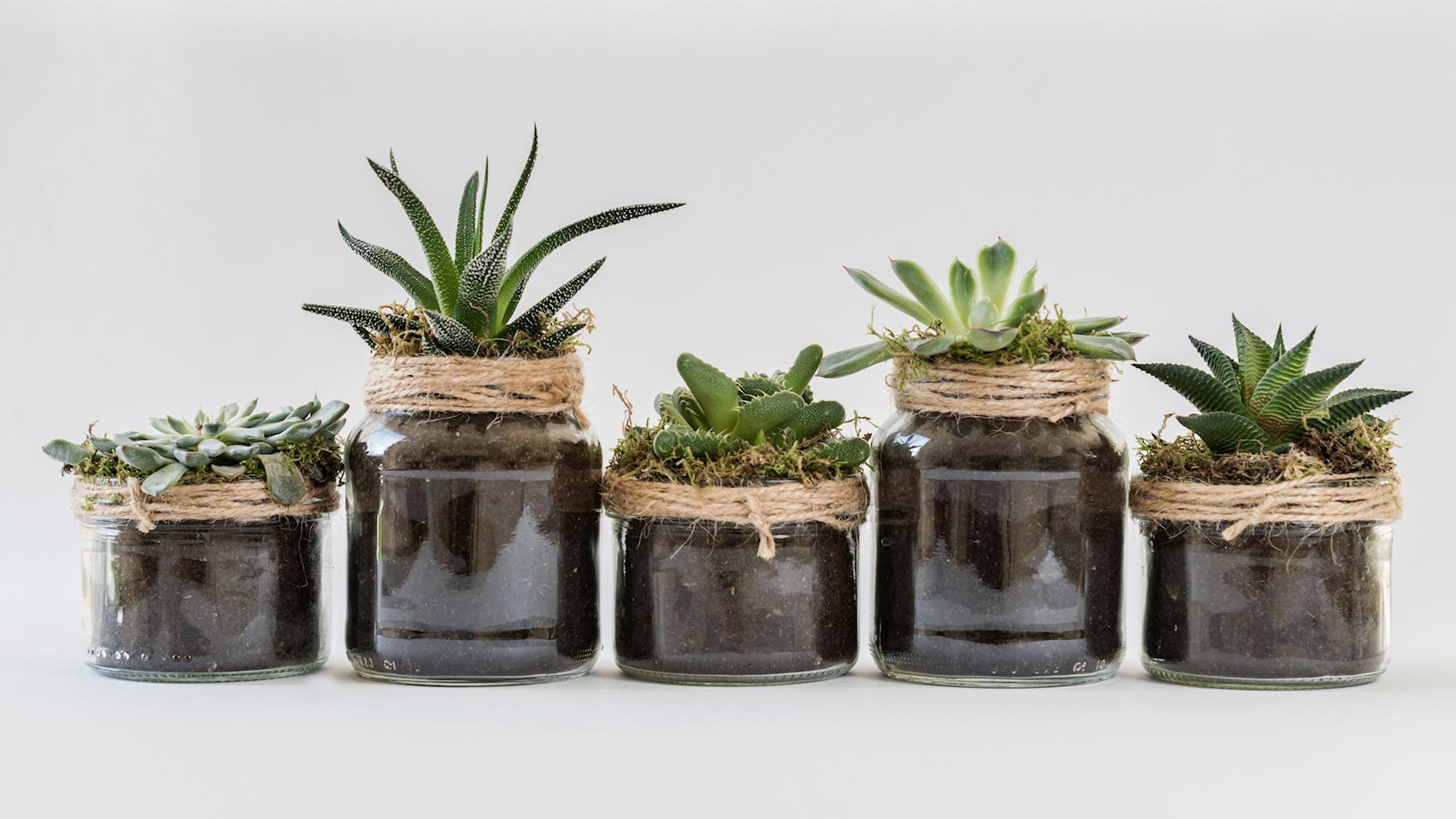 Why Succulent Fertilizer Is Important How To Make Your Own