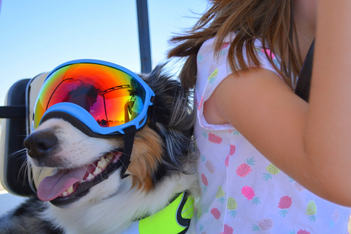 Durable Dog Goggles for any Adventure Dog