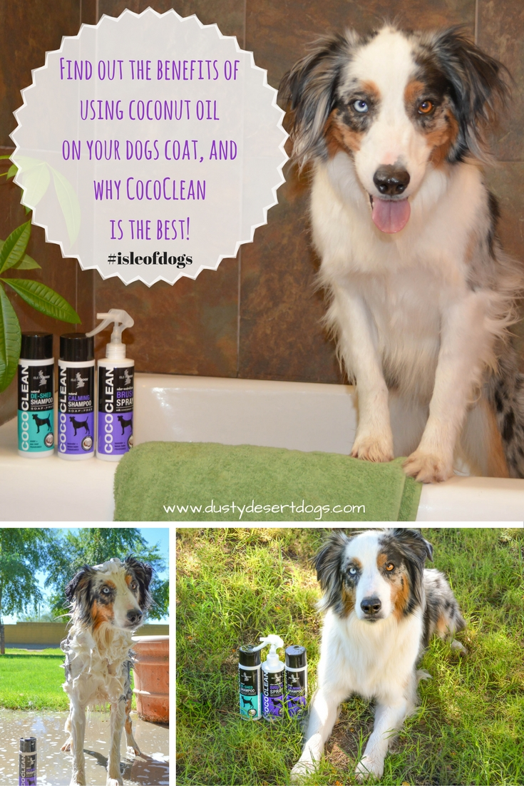 find-out-the-benefits-of-using-coconut-oil-on-your-dogs-coat-and-why-cococlean-is-the-best