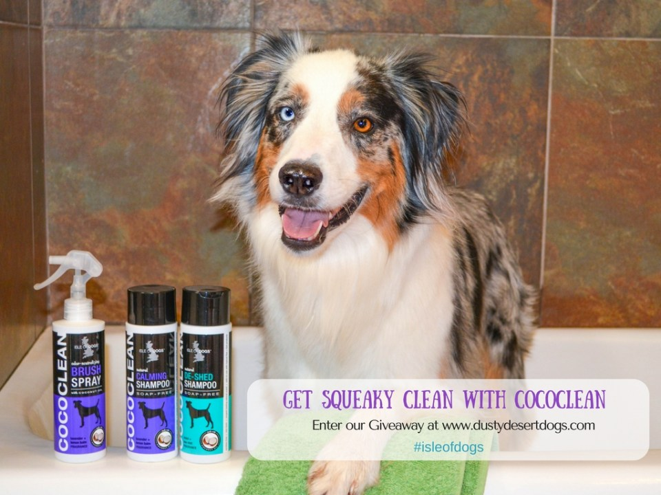 get-squeaky-clean-with-cococlean