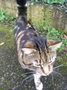 This friendly cat was stopping walkers short-cutting across a path to the centre of town.