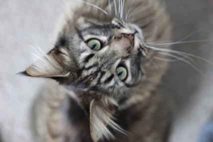 Katten oppas_1