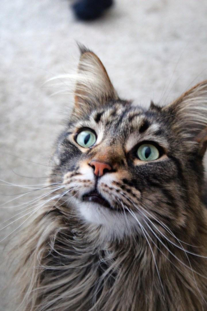 De handigste katten gadgets