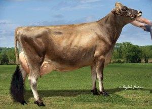 Dutch-Hollow-Samson-Cherish-5254-ET_16