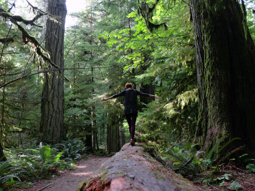 Cathedral Grove Redwood Forest with Dutchie Love