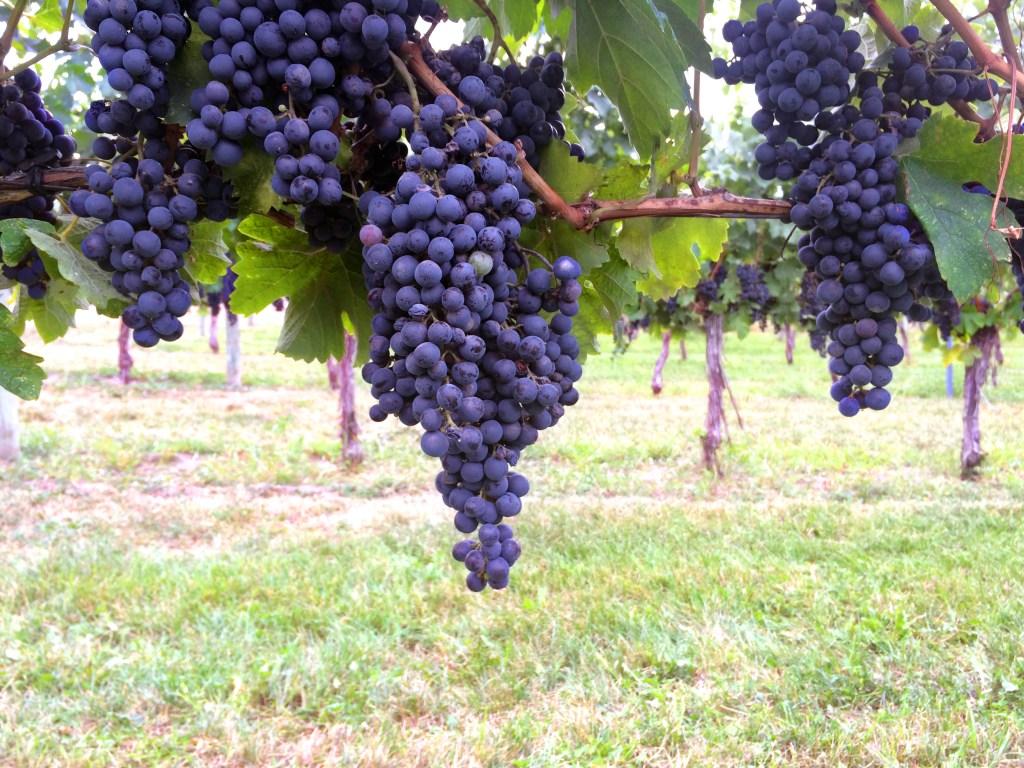 St. Hubertus Estate Winery | Dutchie Love tasting