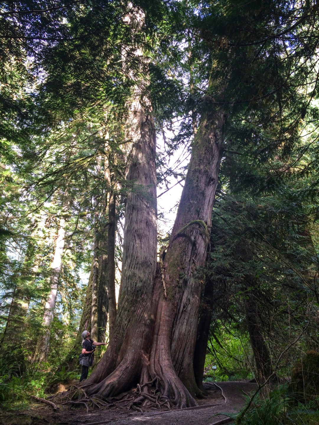 Vancouver Island Cathedral Grove | Dutchie Love