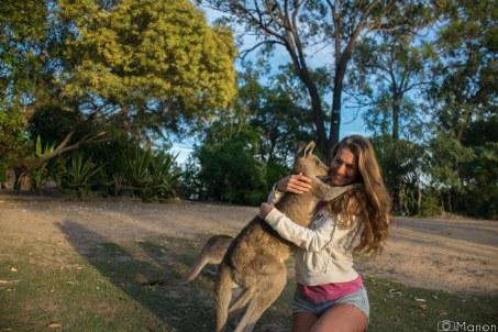 Kangaroos-3