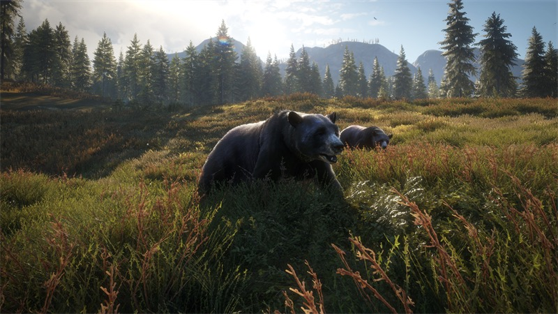 theHunter: Call of the Wild Announcing Pacific Northwest Hunting Reserve Release Trailer Now Available
