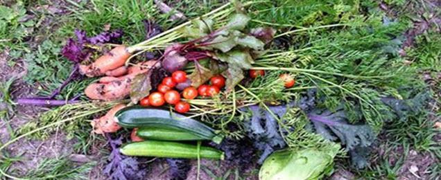 Duurzame voeding van Zelfoogstuin Gijs Nauta
