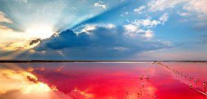 В Херсонской области вблизи с. Григорьевка есть уникальное розовое озеро.