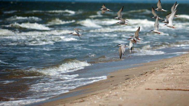 Черное море почти в два раза грязнее Средиземного — исследование