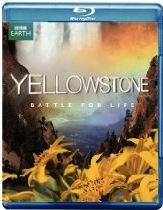 yellowstonebattlebd
