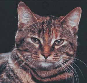 el-lenguaje-del-gato